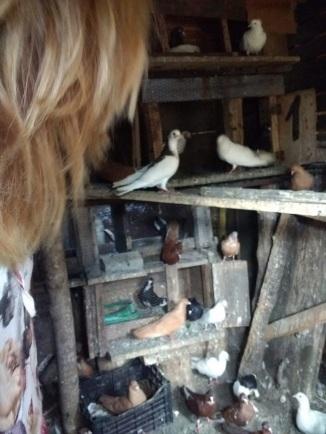 Svetlana's Doves